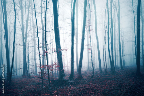 Fantasy dark blue red colored foggy forest tree landscape. Color filter effect used.
