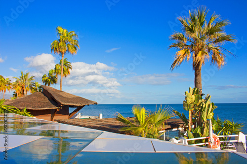 Fotobehang Tropical strand Palm tree. Beautiful beach view. Costa del Sol, Andalusia, Spain.