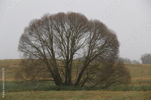 einsame Bäume - 180011278