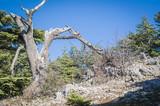 Al Shouf Cedar Nature Reserve Líbano, Cedros de Deus.