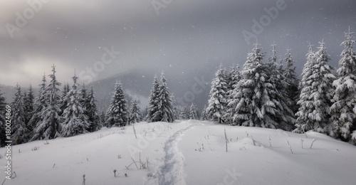 Fotobehang Donkergrijs Fantastic winter landscape
