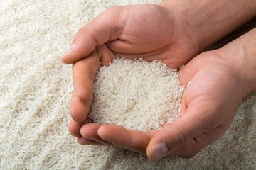 Vertical shot of hands holding rice for survival