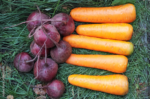 Beets and carrots on the grass