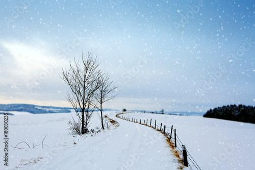 Foto op Plexiglas Blauwe hemel Trees with snow and winter road.