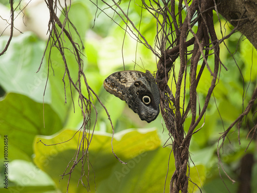 Fotobehang Vlinder mariposa