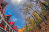 Autumn vegetation and red roof - 180051856
