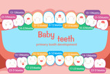 baby tooth chart - 180073238