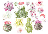Set with watercolor cacti and succulents. Illustration - 180078417