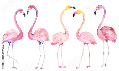 Set watercolor random flamingos. Isolated hand drawn illustration