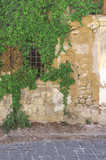 Old ivy window at abandoned yellow block cement house