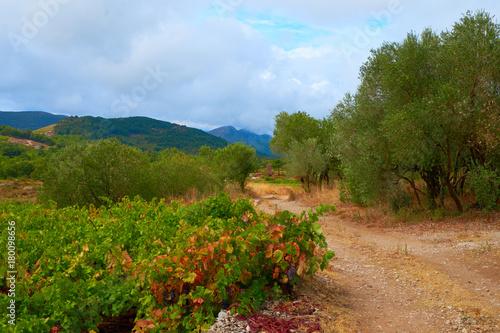 Fotobehang Wijngaard Mediterranean wine fields