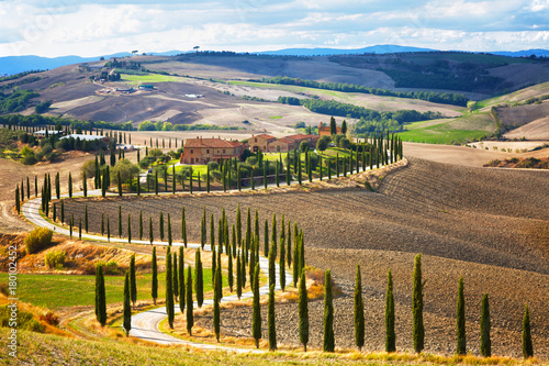 Staande foto Toscane Landscape of hills, country road, cypresses trees and rural houses,Tuscany , rural Italy