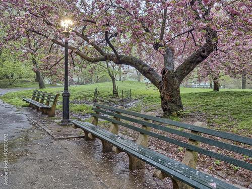 Papiers peints Olive Central Park, New York City spring