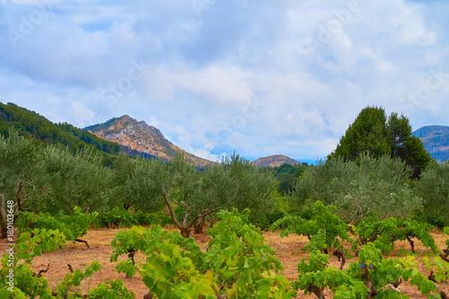 Aluminium Blauwe hemel Mediterranean landscapes
