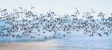 Freiheit, Traum vom Fliegen, Möwenflug, Möwenschwarm über der Nordsee :) - 180106213
