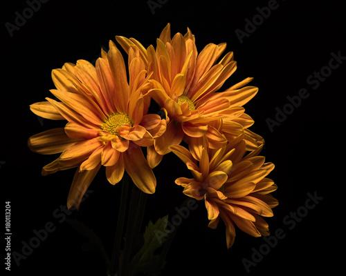 Fotobehang Natuur Orange Mum Trio 1108