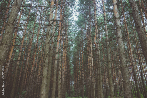 Beautiful summer forest with different trees. Toned image.