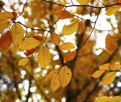 Fotobehang Honing Different views of autumn scenery