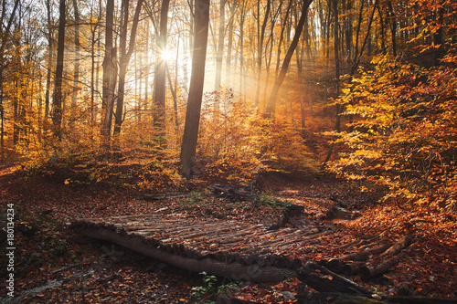 Foto op Aluminium Herfst Wood bridge in autumn forest with a foggy sunrise