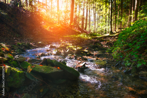 Fotobehang Bergrivier Mountain River in the wood