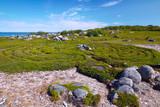 Mysterious labyrinth on Bolshoi Zayatsky island Solovetsky arch - 180138071