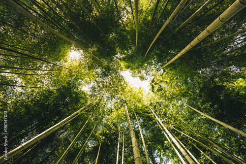 Fotobehang Bamboe Bamboo forest Arashiyama near Kyoto, Japan