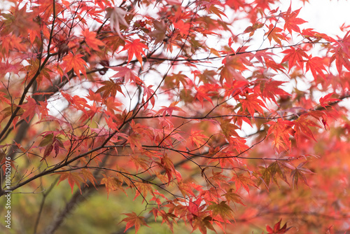 Fotobehang Kyoto Autumn scenery of a Japanese garden