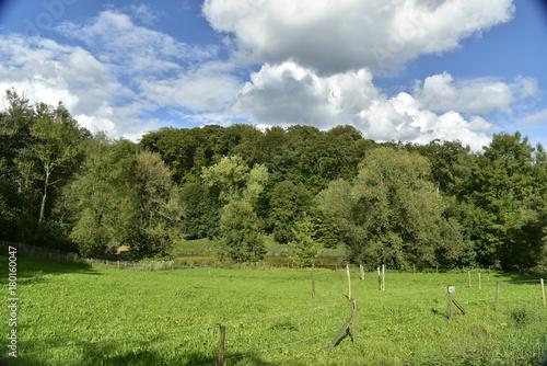 Foto op Canvas Pistache Les hêtres majestueux de la forêt de Soignes près de l'abbaye du Rouge-Cloître entre ombres et lumière du soleil