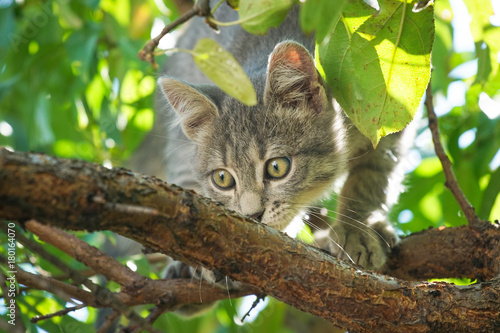 Gray cat on tree Poster