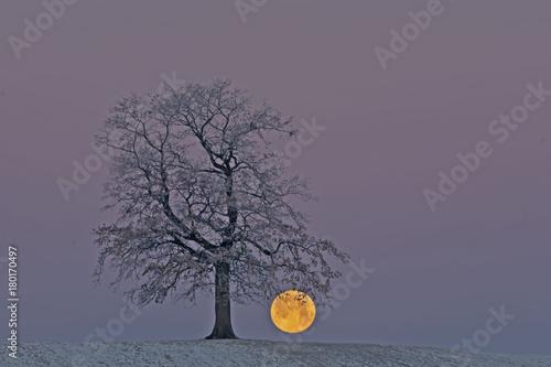 Staande foto Lavendel Volmond Winter Frümorgens