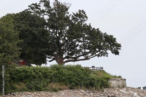 Fotobehang Lente Colonial Tree