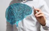 human brain - 180183684