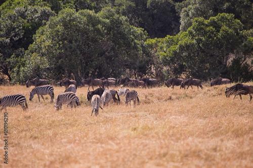 Fotobehang Zalm Landscape in masai mara in kenya africa