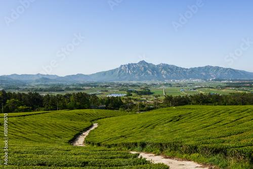Foto op Plexiglas Blauwe hemel 녹차밭