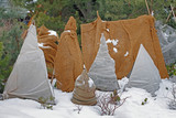 Shrubs protection from frost in winter garden. - 180228247