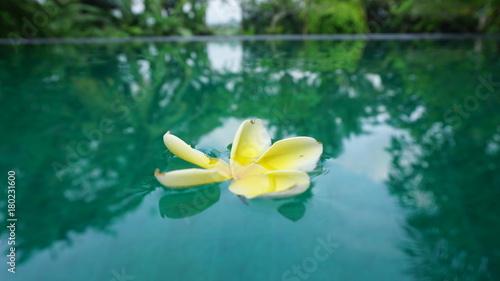 Papiers peints Bali flower_in_water