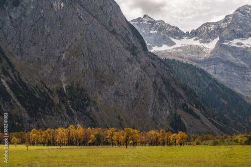 Fotobehang Grijs Ahornboden im Herbst