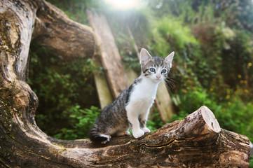 gatti felini animali domestici