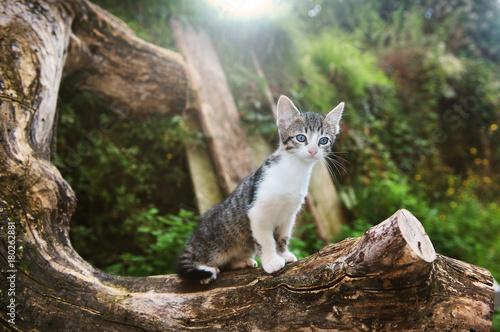 Fotobehang Kat gatti felini animali domestici
