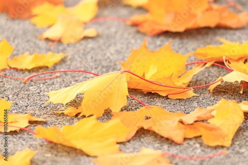 Aluminium Herfst Golden leaves on ground