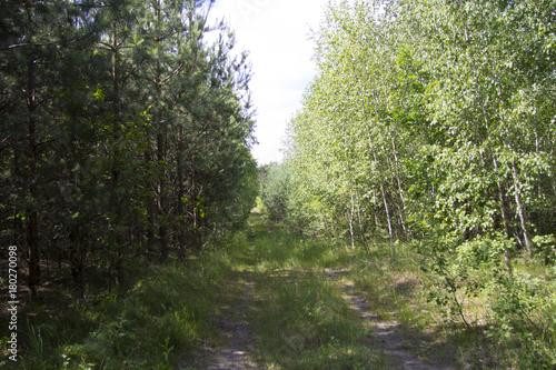 Aluminium Weg in bos droga w lesie