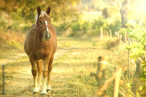 Staande foto Zwavel geel standing, single horse on a dirt road on a sunny summer day