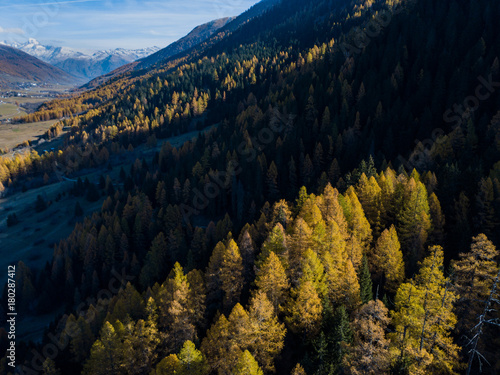 Fotobehang Zwart Aerial view of yellow conifer in autumn. Beautiful morning light in Switzerland