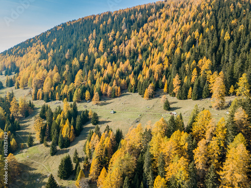 Papiers peints Miel Aerial view of hiking trail in Swiss mountains. Fall colors with yellow conifer trees.
