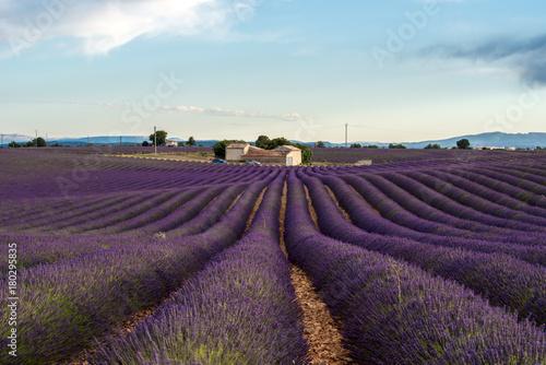 Fotobehang Aubergine Lavender fields