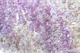 Pink violet flower background