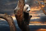 Big panda - 180319663
