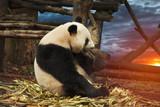 Big panda - 180319675