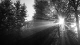 Tot, Trauer - Hintergrundtextur  - 180320282