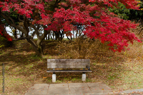Foto op Canvas Herfst Red maple on autumn season at Japan